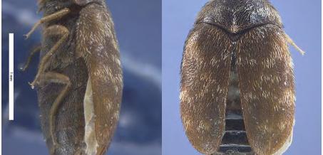 Changes to Khapra Beetle Measures